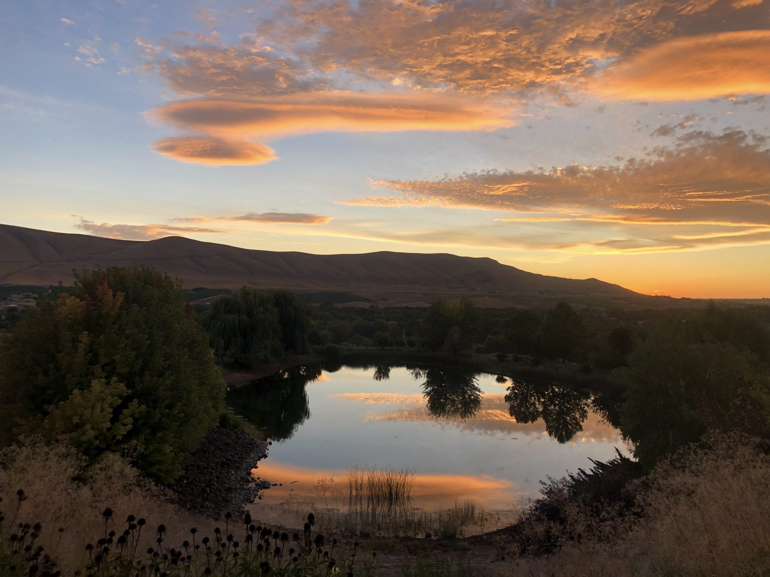 a photo of hills and trees in Washington wine country at sunset. the sky is light blue with gorgeous peach-colored clouds. a pond in the foreground reflects the sky like a mirror.