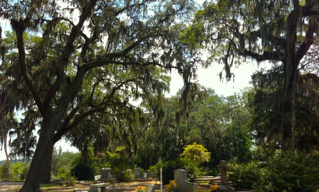 """a photo of oak trees towering over gravestones at a cemetery in Savannah, Georgia. Spanish moss grows in thick clumps on every visible branch. a row of headstones peek out from the bottom of the cropped photo. i grew up believing Spanish moss was a parasite on the mighty trees that did all the work. but they're both just plants in an complex ecosystem. the real parasites are billionaires. also, i spelled """"cemetery"""" right on the first try. 😎"""