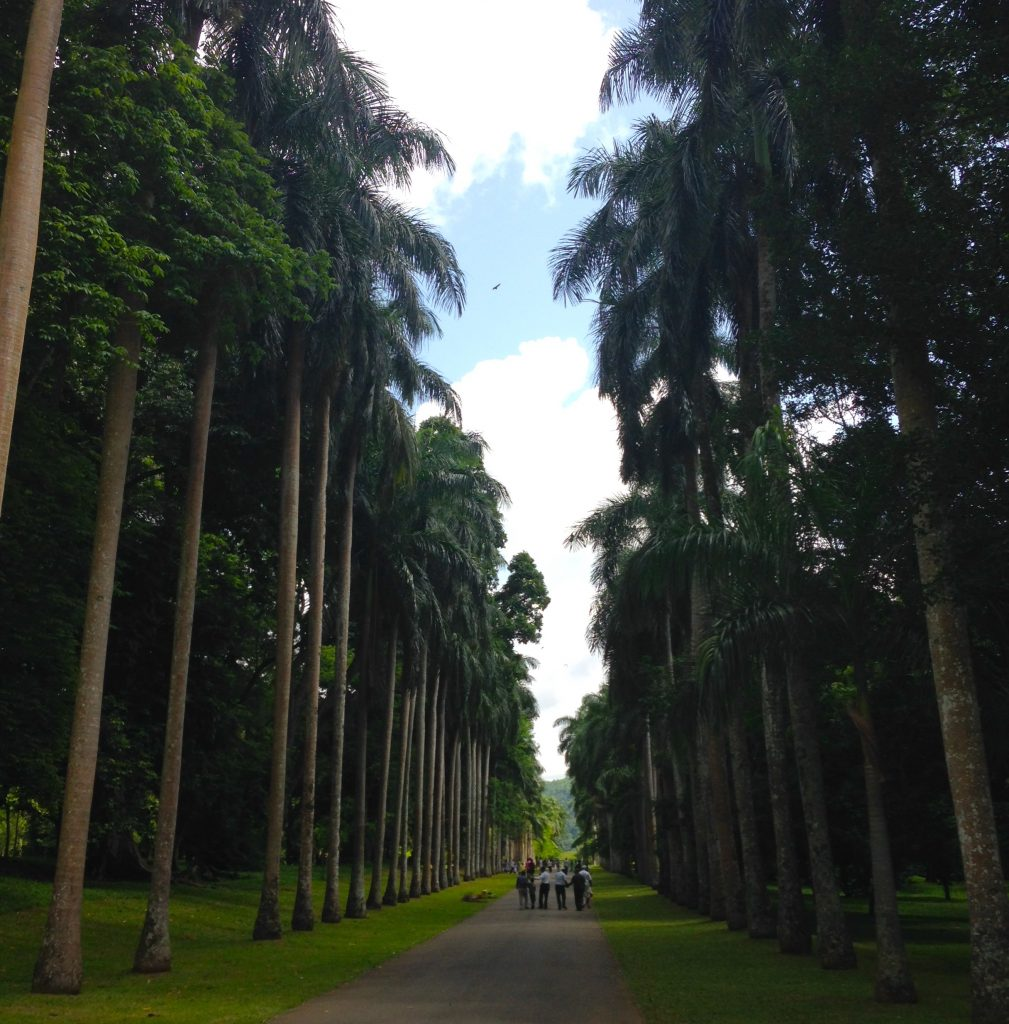 a photo from the Royal Botanic Gardens in Kandy, Sri Lanka. a grove of palm trees line a brown gravel path in two neat, orderly rows. green grass covers the ground wherever there isn't gravel. the sky above is cloudy, with blue skies tinged with yellow from the heat and humidity. a group of five or six people are walking away from the camera, on the path, towards the distance. the framing of the photo, the path, the people, would all have you believe that this is the direction we should walk. but the truth is, we could move in nearly any direction. why shouldn't we try?